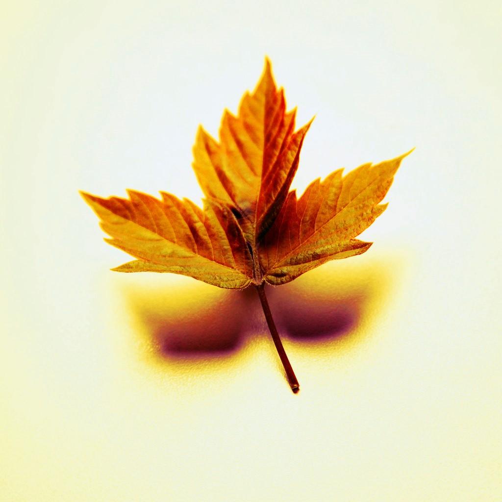 autumn leaf picture